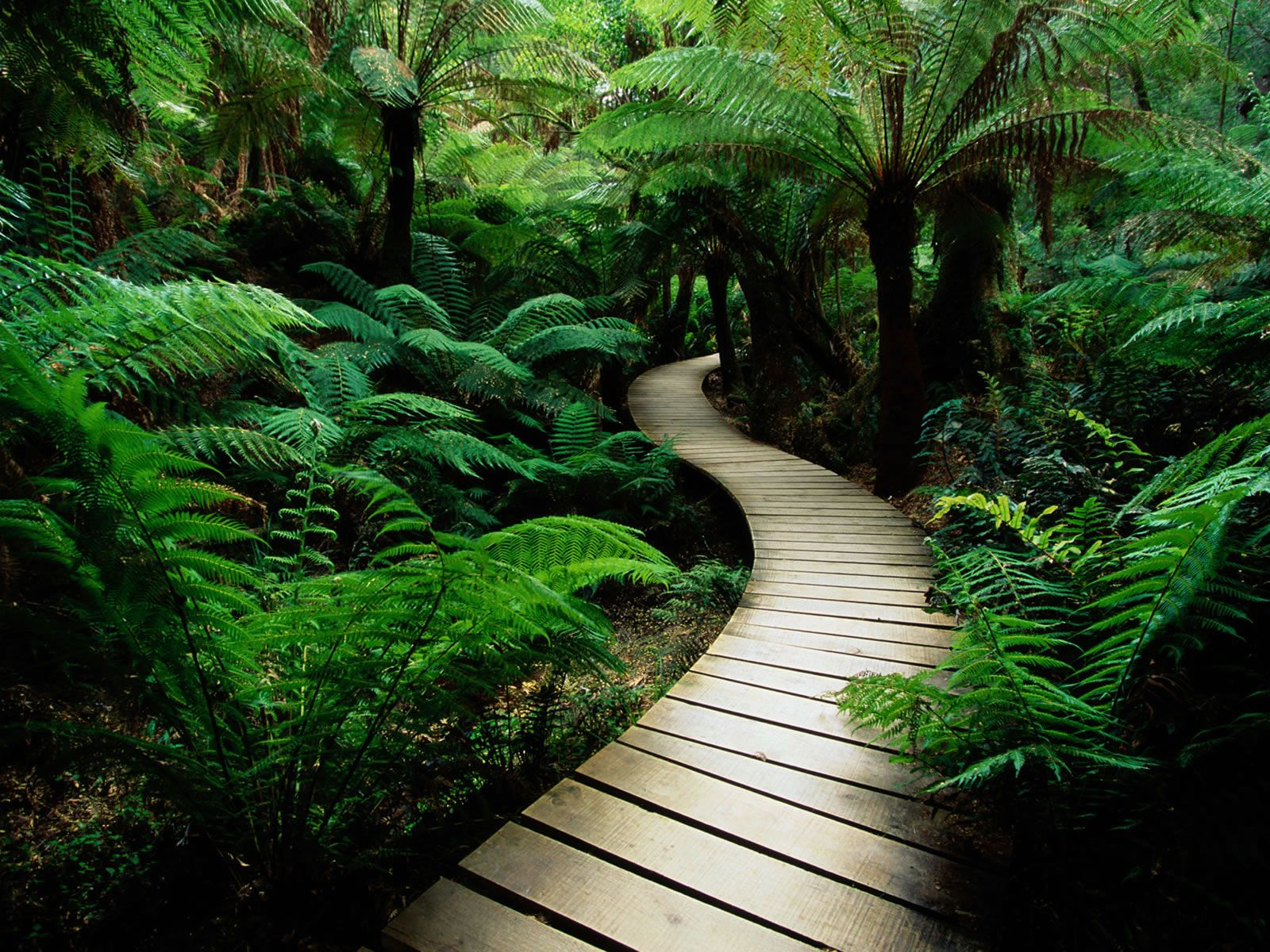 http://www.pixelstalk.net/free-download-jungle-wallpapers-hd/